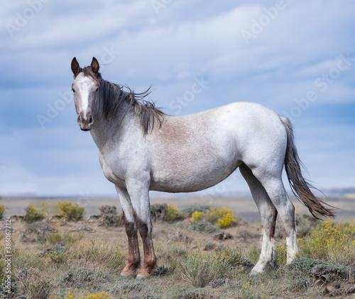 Obraz na plátne Wild horses
