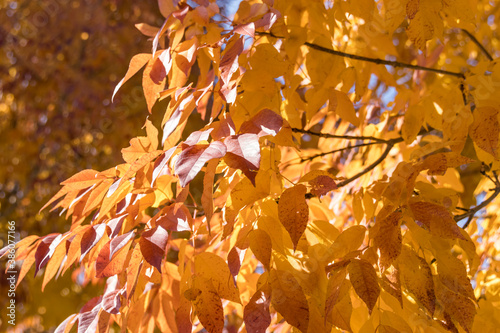 Fototapety pomarańczowe  golden-and-orange-leafy-background-of-fall-color