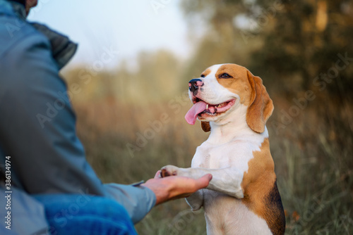 Fotografia Dog training