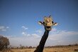 Photo Taken in Lion and Rhino Reserve, Krugersdorp
