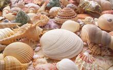 Many Different Seashells Close...