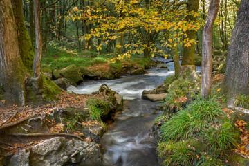 Draynes wood golitha falls Cornwall