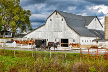 Amish Buggy And White Barn