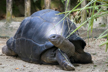 The Closeup Image Of Aldabra G...