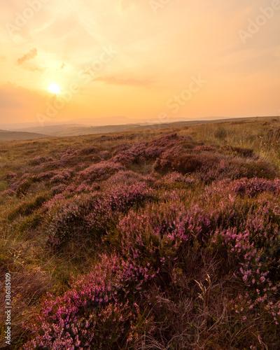 Fototapeta Summer Sunset Countryside Landscape Photo