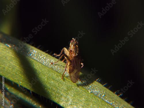 Obraz roślina macro natura jesień światło ogród - fototapety do salonu