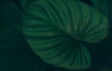 Green Leaves For Nature Backgr...