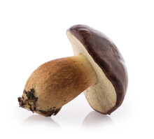 Edible Bay Bolete (Imleria Badia) Mushroom Isolated On White Background