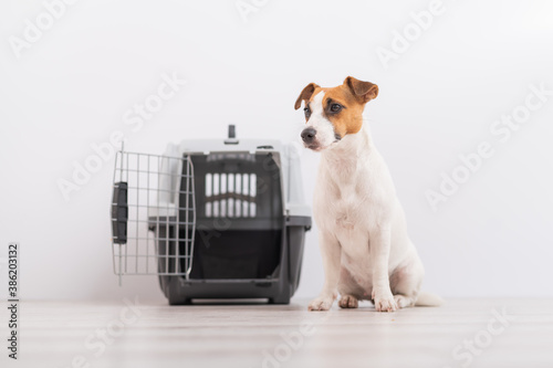 An obedient Jack Russell Terrier dog sits next to a travel box while waiting for a trip. Travel concept with pets © Михаил Решетников