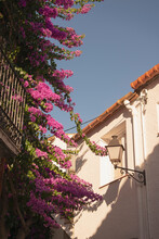 Typical Cadaques, Girona, Spain White House Detail With Blue Sky And Climbing Bougainvillea Pink Flower During Summer On A Sunny Day