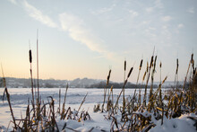 Cane And Vegetation Over Frozen Lakes. Cattail Reeds On The Lake In The Snow A Winter Landscape