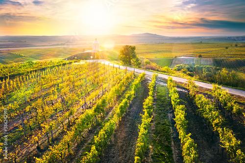 Cuadros en Lienzo Sunset above vineyard with chapel