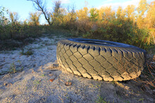 Abandoned Tire In Forest