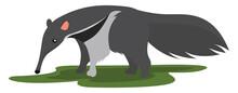 Grey Ant Eater, Illustration, Vector On White Background