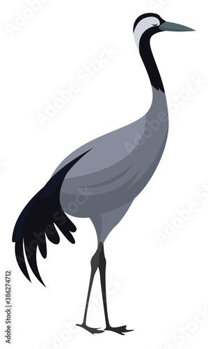 Naklejka premium Eurasian crane, illustration, vector on white background
