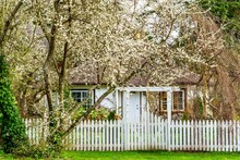 Small Country Cottage With White Blossoms All Over