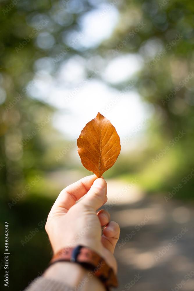 Fototapeta Liść w dłoni