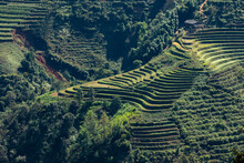 Rice Terrace In The Landscape ...