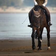 Bay Suit Horse On Shore