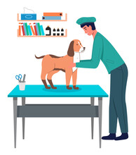 Dog At Reception Of Veterinari...