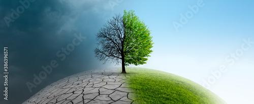Fotografie, Obraz Baum auf einer Weltkugel im Klimawandel