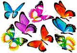 butterfly726
