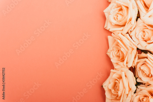 top view of roses border on coral background