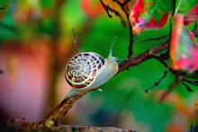 Beautiful Nature Image - Snail...