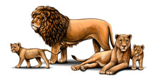 Family Of Lions. Pride. Color,...