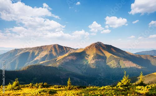 Obraz Tranquil sunny day in alpine valley. Location place of Carpathian mountains, Ukraine. - fototapety do salonu