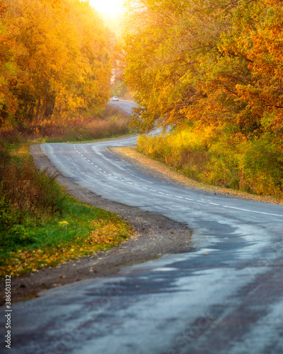 Beautiful view of the autumn road through the forest with sunlight.