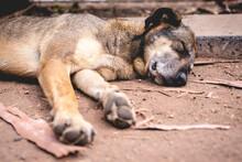Relax Street Dog Sleeping On T...
