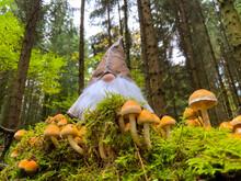 Trolle Im Herbst Im Oberbergischen Land