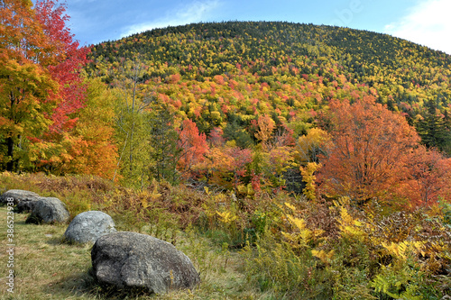 Photo Scenic view of colorful hillside covered with brilliant autumn foliage in the White Mountain National Forest of New Hampshire