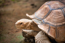 Close Up Turtles Walking On Grass