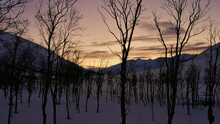 Silhouettes Of Bare Trees In Evening Light With Snow-covered Mountains In Winter Time Near Ersfjordbotn, Norway, Scandinavia.