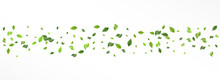 Lime Leaves Falling Vector Panoramic White