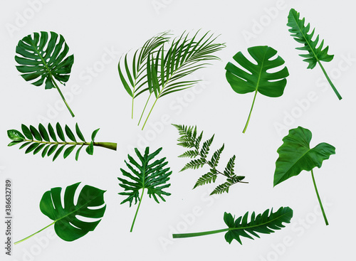 Fototapeta More beautiful exotic tropical leaves, isolated leaf background obraz