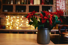 Christmas Star Flower In Pot On Table With Bokeh Lights On Background, Copy Space. Christmas Concept. Poinsettia (Euphorbia Pulcherrima)