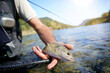 fly fisherman in summer catching a rainbow trout fishing in a mountain river