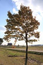 秋の平城宮跡