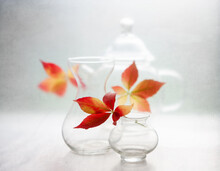 Three Glass Vases With Bright Autumn Leaves On The Table On A Light Transparent Background. Still Life