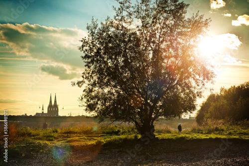 Obraz Baum am Rheinufer mit Blick auf den Dom im Sonnenuntergang - fototapety do salonu