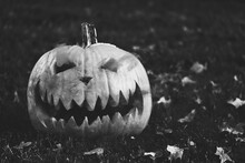Halloween Pumpkin In Black And...