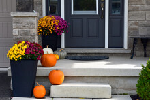 Chrysanthemums And Pumpkins In Front Of A House At Halloween