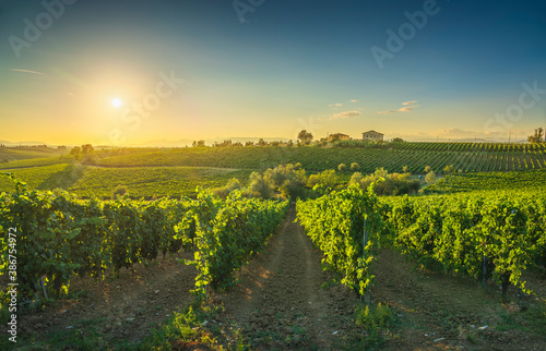 Naklejka premium Chianti vineyards and panorama at sunset. Cerreto Guidi, Tuscany, Italy