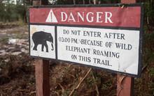 Beware Of Wild Elephants / Dan...