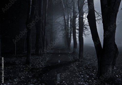 The foggy asphalt road between trees in the night - 386858399