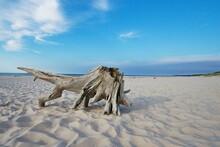 Dry Stump On A Sandy Beach Near The Sea