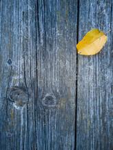 Autumn Again - Coloured Maple ...